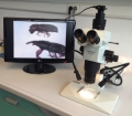 Zoom stereo microscope with digital camera